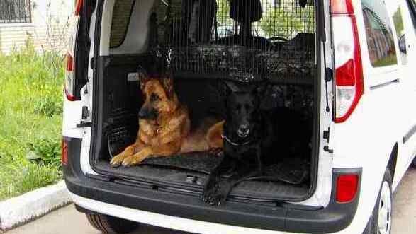 Удобно даже для двух собак